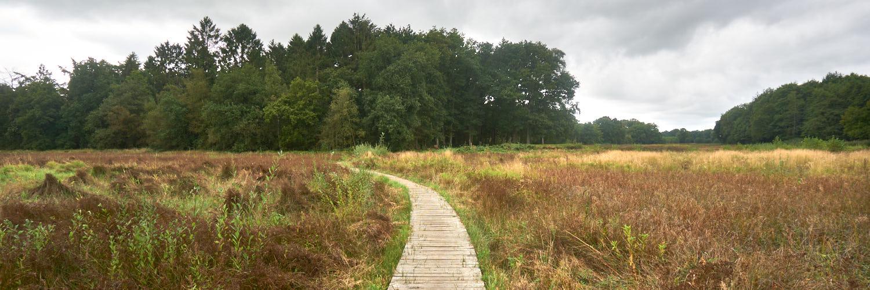 NS-wandeling Drentsche Aa | 15 km